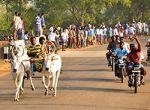 சிவகங்கை மாவட்டம் கல்லலில் நடைபெற்ற ரேக்ளா ரேஸ் படங்கள் எஸ்சாய்தர்மராஜ்