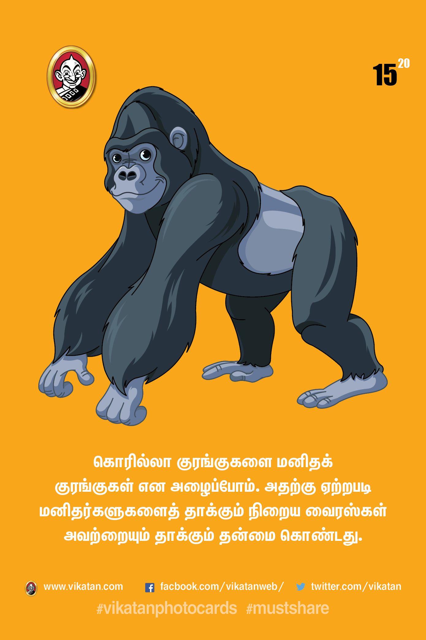 பென்குயின் எப்படி புரபோஸ் செய்யும் தெரியுமா? #VikatanPhotoStory
