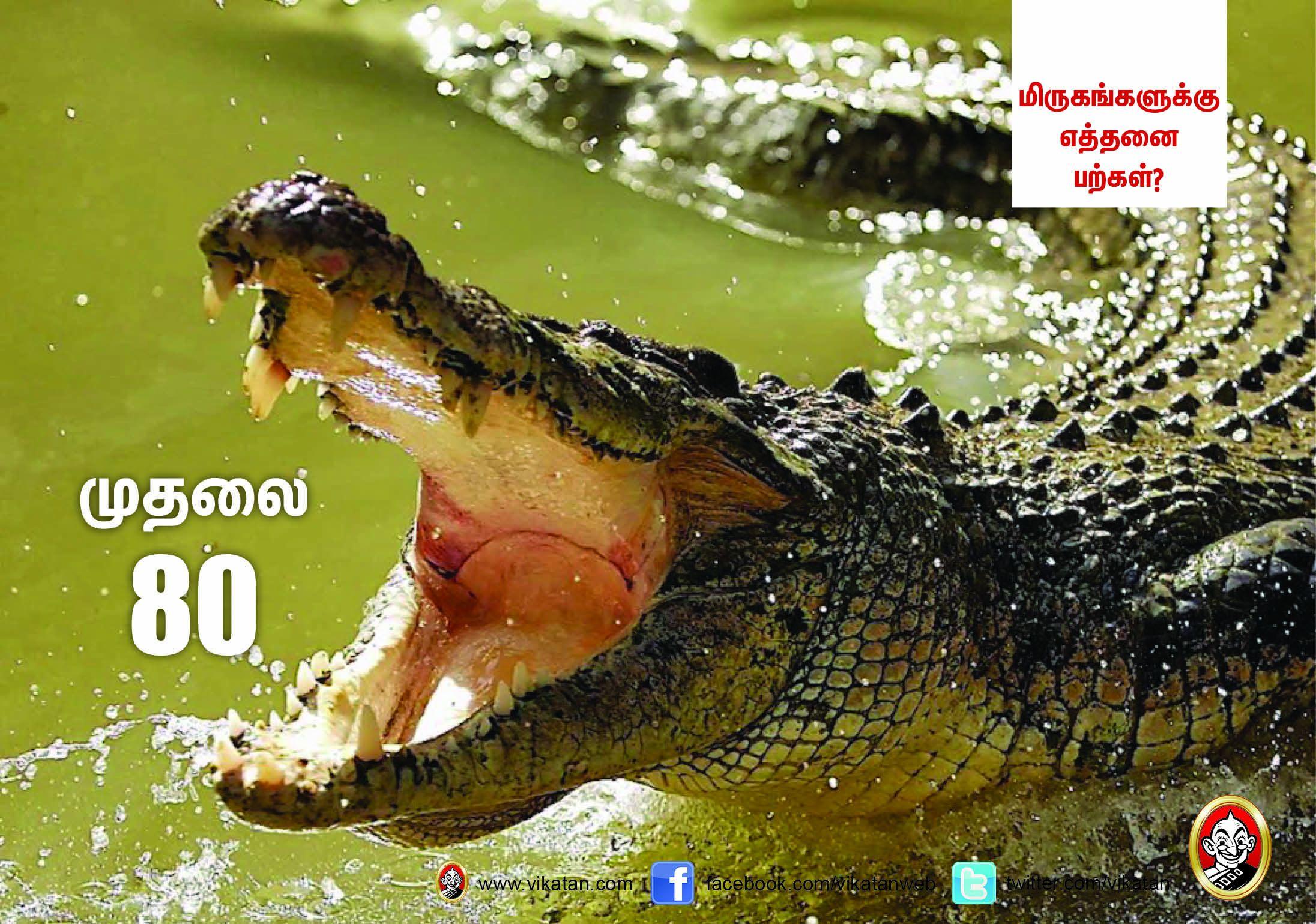 சிங்கம் 30... நாய் 42... மிருகங்களுக்கு எத்தனை பற்கள்? #VikatanPhotoCards