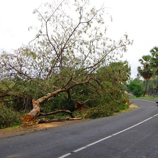 Cutting down trees to widen  Highways