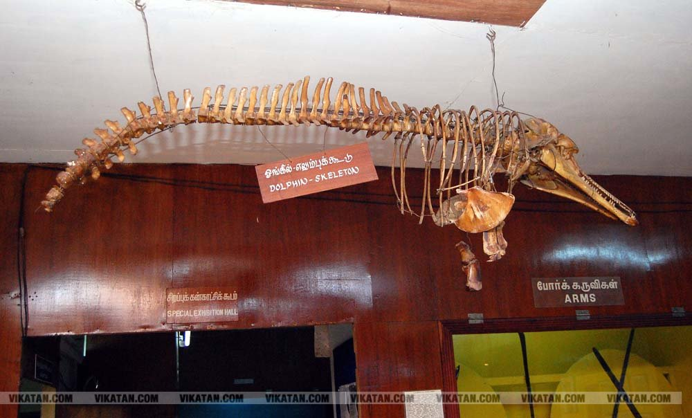 கலைநயம் மிகுந்த கன்னியாகுமரி அரசு அருங்காட்சியகம்... படங்கள் - ரா.ராம்குமார்