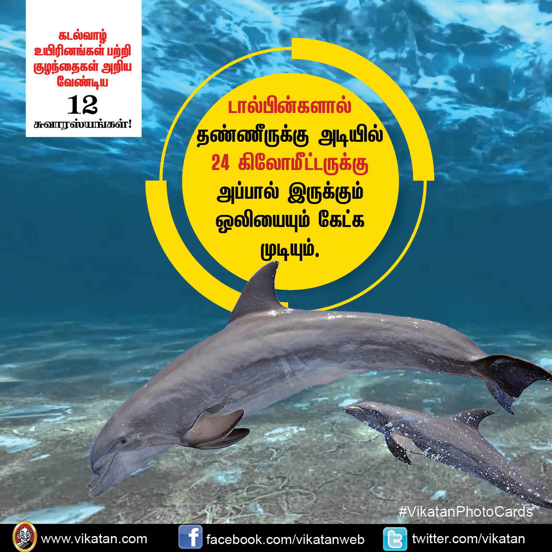 கடல்வாழ் உயிரினங்கள் பற்றி குழந்தைகள் அறிய வேண்டிய 12 சுவாரஸ்யங்கள்! #VikatanPhotoCards