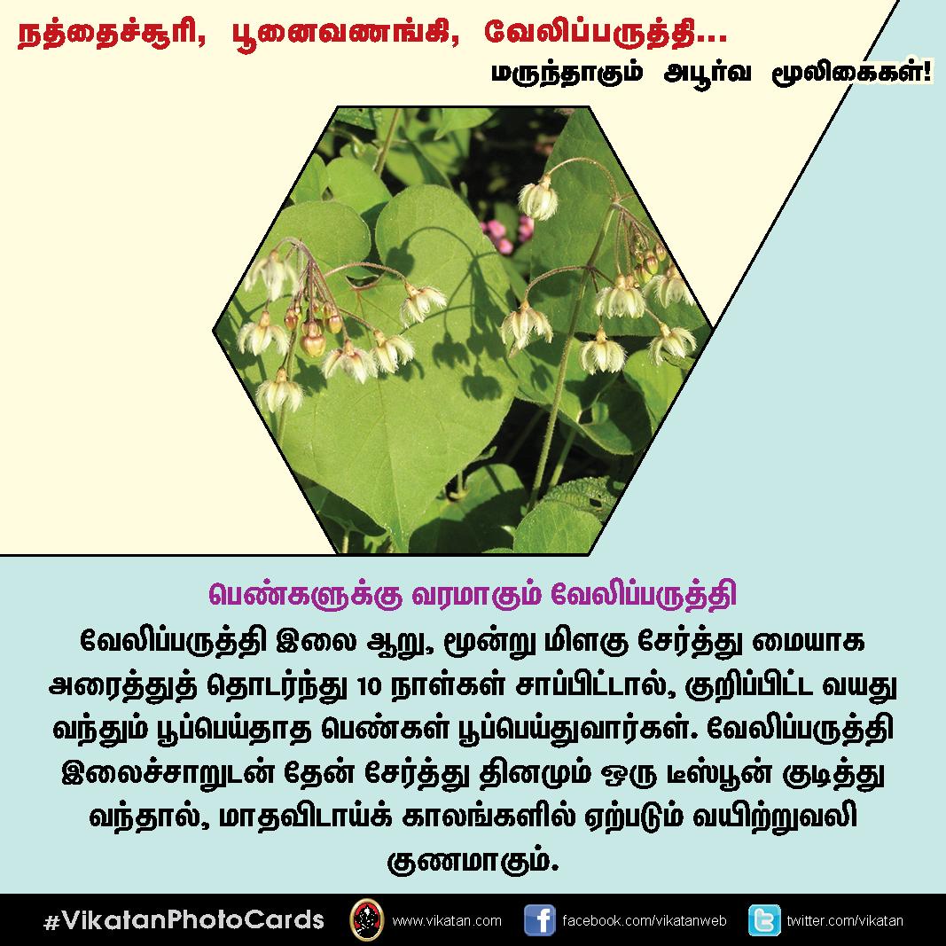 நத்தைச்சூரி, பூனைவணங்கி, வேலிப்பருத்தி... மருந்தாகும் அபூர்வ மூலிகைகள்! #VikatanPhotoCards