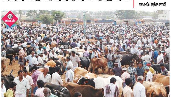 எம்.ஜி.ஆராக மாறிய தினகரன்... ஈரோட்டில் நடைபெற்ற மாட்டுச் சந்தை... #NewsInPhotos