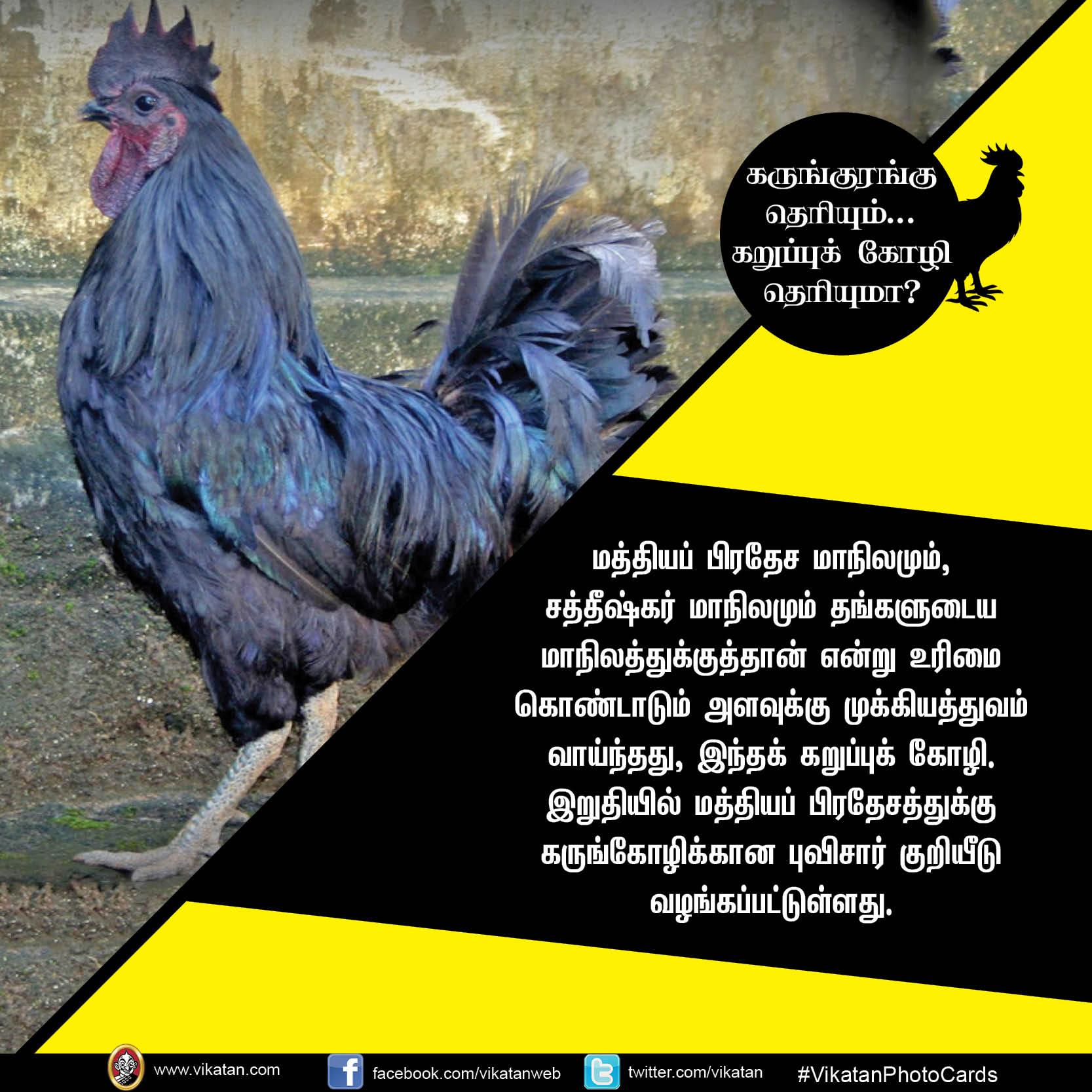 கருங்குரங்கு தெரியும்.. கறுப்புக் கோழி தெரியுமா? #VikatanPhotoCards