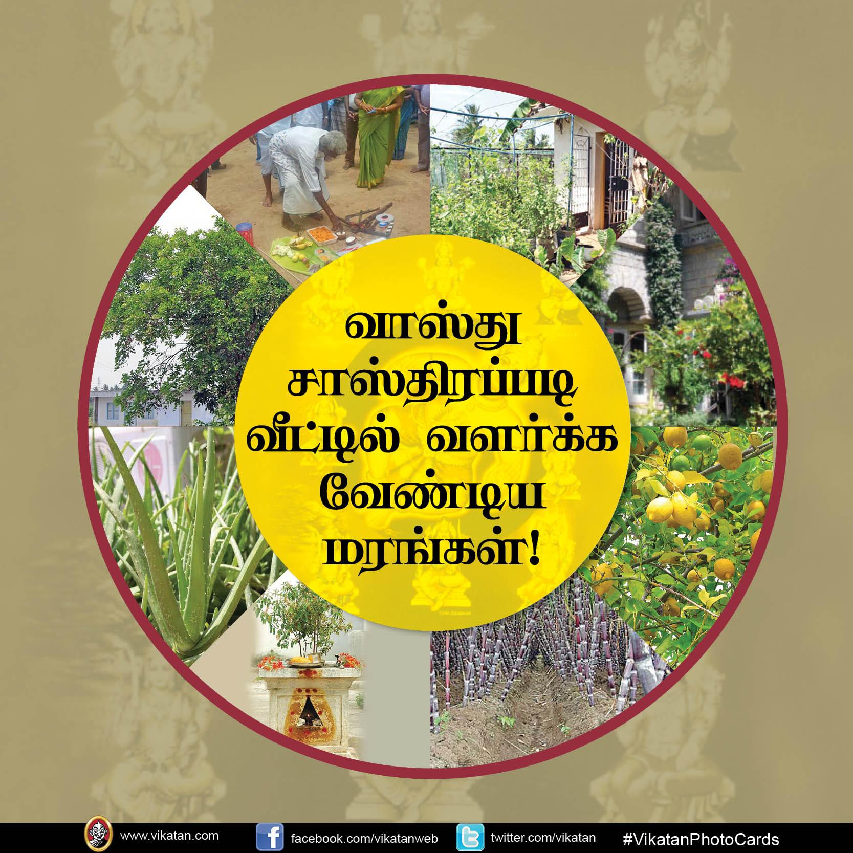 வாஸ்து சாஸ்திரப்படி வீட்டில் வளர்க்க வேண்டிய மரங்கள்! #VikatanPhotoCards