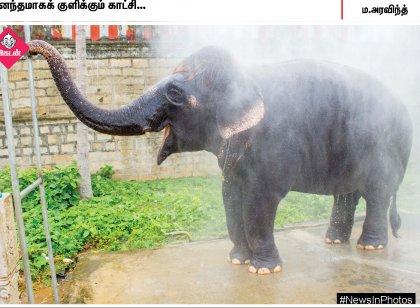 ஷவரில் ஆனந்தமாகக் குளிக்கும் கோயில் யானை... ஆதரவற்றோருக்கு இனிப்பு வழங்கும் கிரண்பேடி... #NewsInPhotos