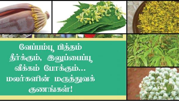 வேப்பம்பூ பித்தம் தீர்க்கும்,  இலுப்பைப்பூ வீக்கம் போக்கும்... மலர்களின் மருத்துவக் குணங்கள்! #VikatanPhotoCards