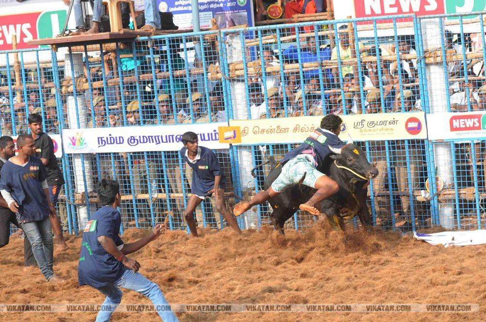 ஈரோடு மாவட்டத்தில் முதல் முறையாக நடைபெற்ற ஜல்லிக்கட்டு போட்டி... படங்கள்: ரமேஷ்கந்தசாமி