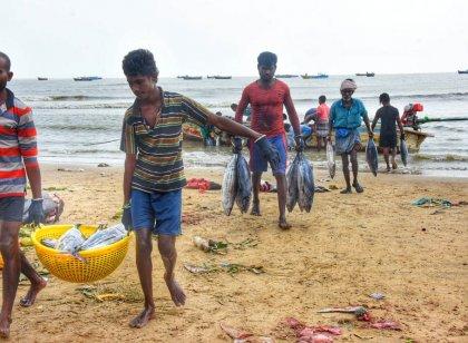 நாகை மாவட்டம் கோடியக்கரை கடல் பகுதியில் பிடிக்கப்பட்ட மீன்கள்! #spotvisit