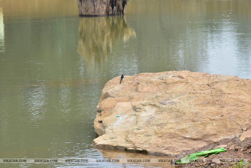 ஏலகிரியில் உள்ள இயற்கைப் பூங்காவை சுற்றிப்பார்க்கலாம் வாங்க... படங்கள்:  பிரபாகரன் செ