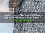 பறக்கும்; 15,000 விதைகள் சேகரிக்கும்... பறக்கும் அணில்களின் சுவாரஸ்யங்கள்! #VikatanPhotoCards