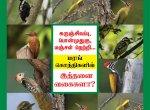 கருஞ்சிவப்பு, பொன்முதுகு, மஞ்சள் நெற்றி... மரங்கொத்திகளில் இத்தனை வகைகளா? #VikatanPhotoCards