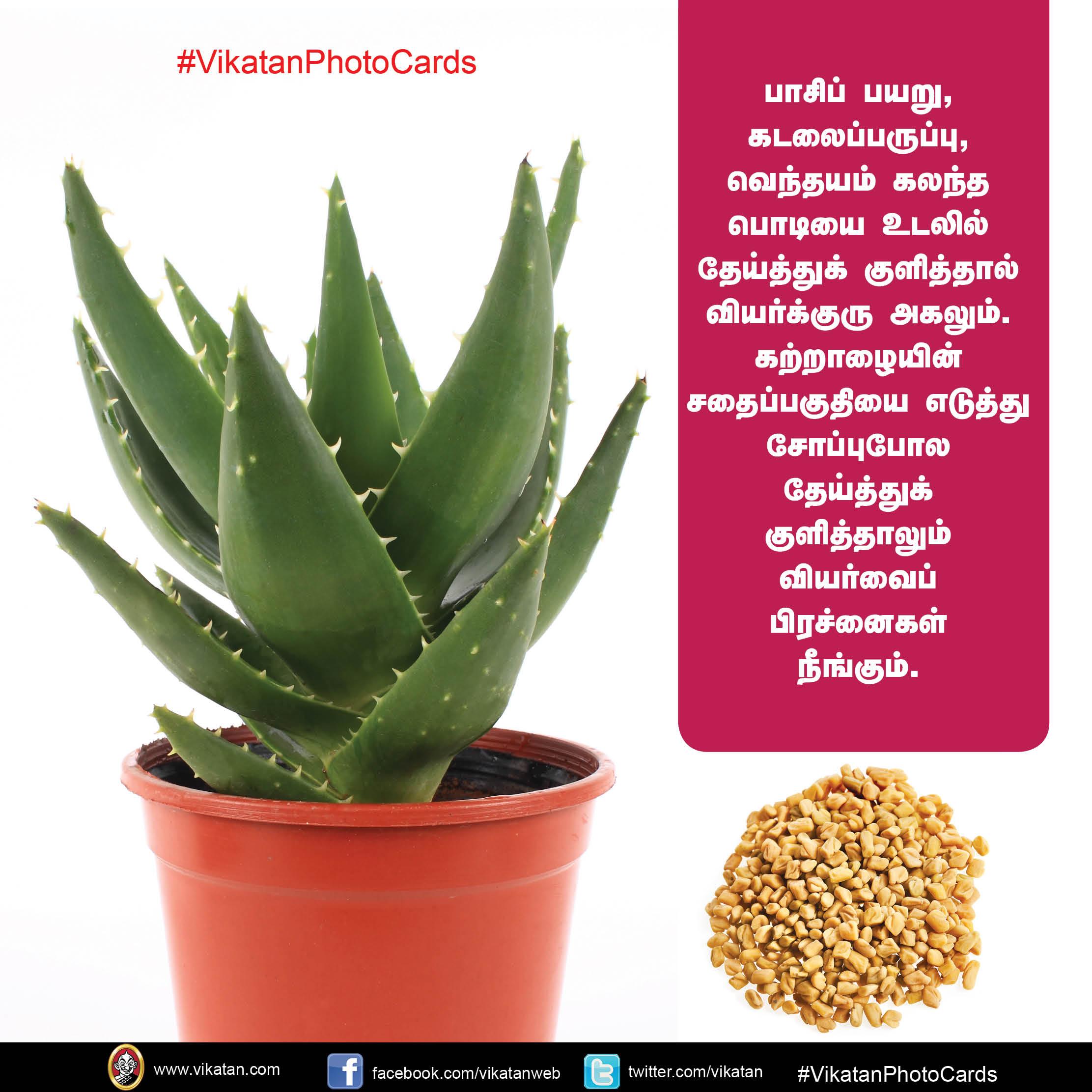 வெயில் காலத்தில் வதைக்கும் வியர்க்குருவைப் போக்க இயற்கையான தீர்வுகள்! #VikatanPhotoCards