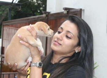 Actress Trisha On Dog Thrown Issue