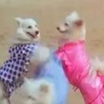 நாய்களுக்கு டூயட், வில்லிக்கு  ரொமான்ஸ் பாட்டு! - தமிழ் சினிமாவின் 'தெறி' பாடல்கள்
