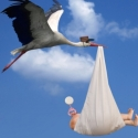 குழந்தைகளை உற்பத்தி செய்யும் இயந்திரமும் ஜூனியர் கொக்கும் #Storks