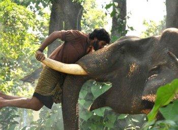 ''கும்கி-2 படத்தின் ஷூட்டிங் இன்னும் தொடங்கவில்லை..!'' - இயக்குநர் பிரபு சாலமன்