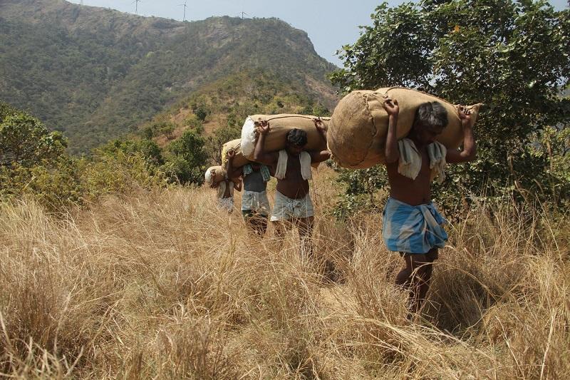 Image result for மேற்குத் தொடர்ச்சி மலை விமர்சனம்