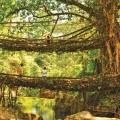 கடவுளின் தோட்டம்! - இது ஆசியாவின் சுத்தமான கிராமம்