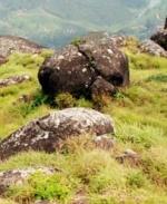 சுற்றுலா பேருந்து பள்ளத்தில் உருண்டு விபத்து:  7 மாணவர்கள் பலி