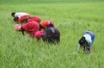புதுக்கோட்டையில் குழந்தைகள் உள்பட 39 கொத்தடிமைகள் மீட்பு