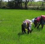 விவசாயம் செய்வோர் எண்ணிக்கை குறைந்து விட்டது: கணக்கெடுப்பில் 'பகீர்'