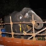 2வது முறையாக புத்துணர்வு முகாமுக்கு சென்ற ராமலட்சுமி!