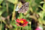 ஸ்ரீரங்கத்தில் ஆசியாவின் மிகப்பெரிய வண்ணத்துப் பூச்சி பூங்கா!