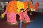சென்னையில் நடைபெற்ற மலர் கண்காட்சி - ஆல்பம்