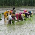 விவசாய பெண் தொழிலாளர்கள் 80%, நிலம் வைத்திருக்கும் பெண் விவசாயிகள் 15%