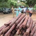 ஆந்திராவில் செம்மரம் கடத்தியதாக 21 தமிழர்கள் கைது!