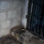 டாஸ்மாக் கடை மீது பெட்ரோல் குண்டு வீச்சு: ஊழியர் பலியால் பதற்றம்!