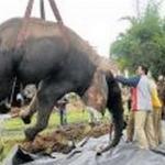மைசூரில்  சர்க்கஸ் நிறுவனம் தவிக்க விட்ட யானை பலி!