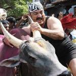 ஜல்லிக்கட்டு தடையால் 'விருமாண்டி' காளைக்கு நேர்ந்த கதி!