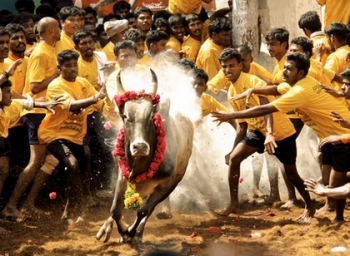 Can the Tamil Nadu government pass an Ordinance to allow Jallikattu to go on?