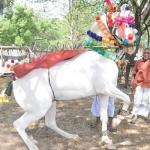குதிரை நடனத்துடன் குதூகல திருமணம்!