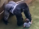 A special zoo response team shot and killed a 17-year-old gorilla named harambe