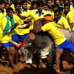 ஜல்லிக்கட்டுக்கு அனுமதி: புதிய சட்ட மசோதா தாக்கலாகிறது!