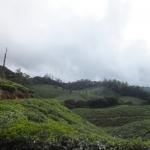 சொர்க்கத்திற்கு ஒரு பயணம்...மாஞ்சோலை எனும் மலை சுற்றுலாத்தலம்!  #WhereIsMyGreenWorld