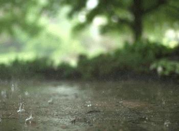 solvanam rain poems