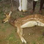 மானை வேட்டையாடியவர்களுக்கு ரூ.1 லட்சம் அபராதம்