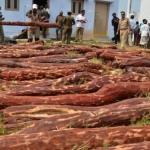 செம்மரம் கடத்தியதாக மேலும் 43 தமிழர்கள் கைது
