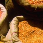 புதிய ரக பருப்பு வகைகளை அறிமுகப்படுத்த மத்திய அரசு முடிவு