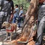 கேரளாவில்  குண்டு வெடிப்பு : உயிர் சேதம் இல்லை