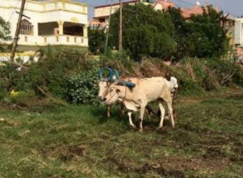 agriculture in chennai city