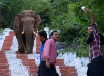 Elephant Banish Devoties while they was trying to take a selfie with it
