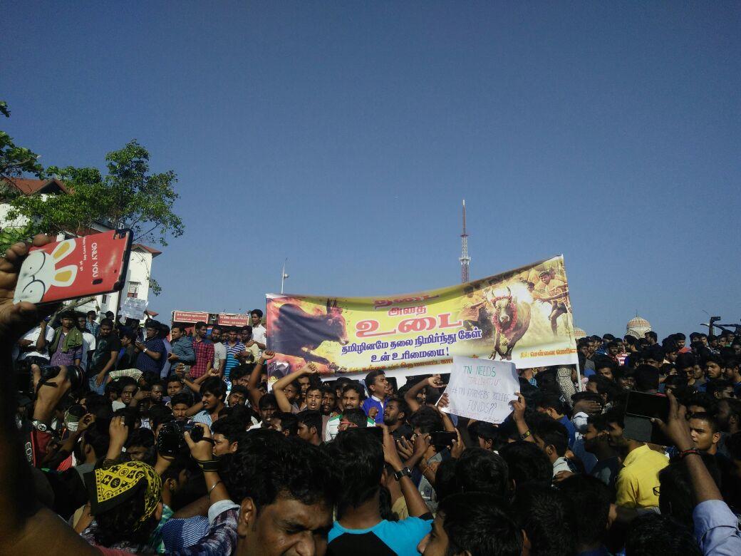 Chennai Marina Jallikattu protest