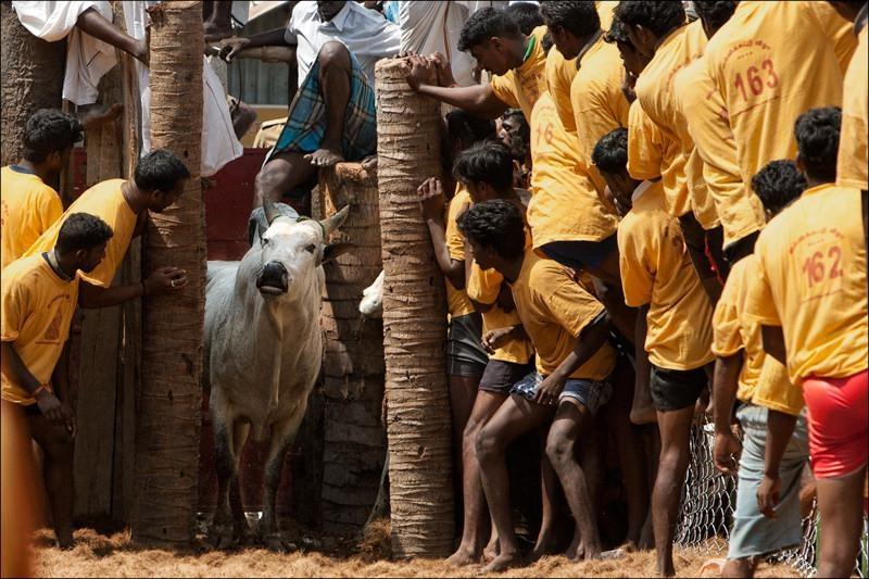 அலங்காநல்லூர்