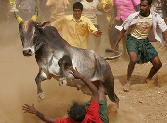 Tamilnadu goverment is planning to bring ordinance for Jallikattu